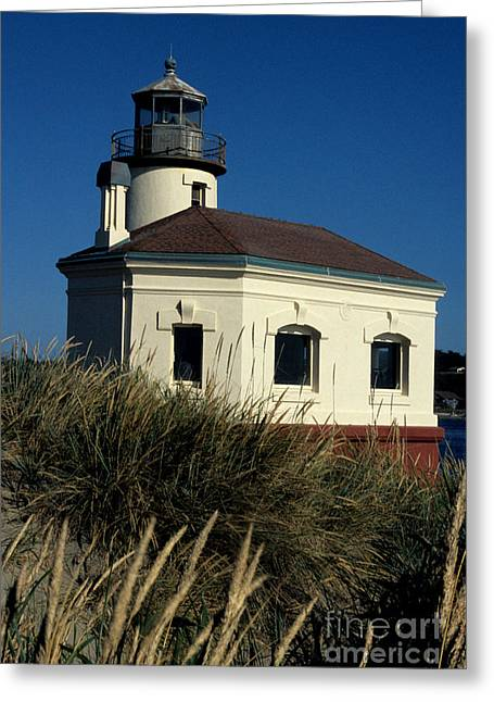 Coquille Light Greeting Card by Sharon Elliott