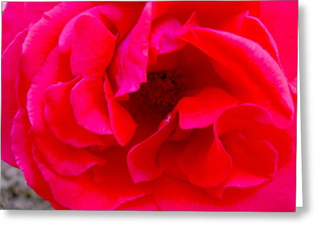 Coral Beauty Greeting Card