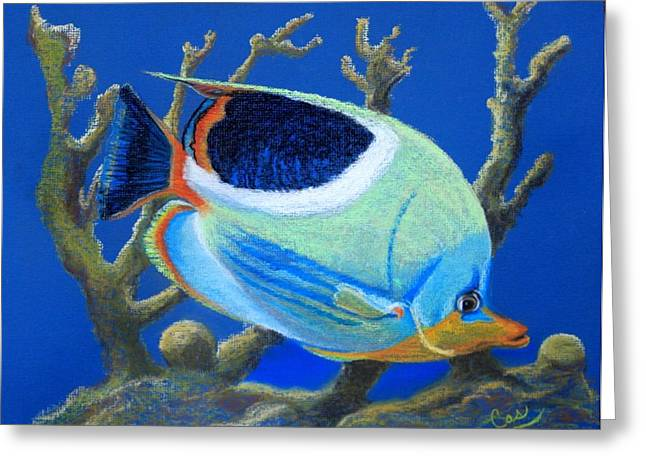 Coral Garden Greeting Card by Karen Casciani
