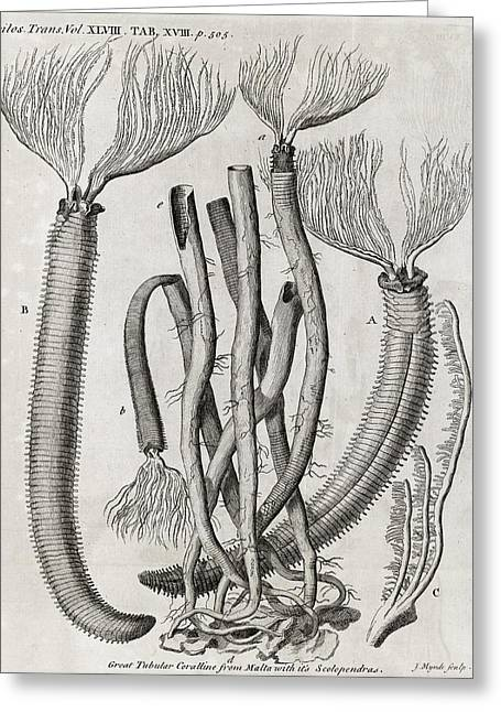 Coral-like Polyps, 18th Century Greeting Card