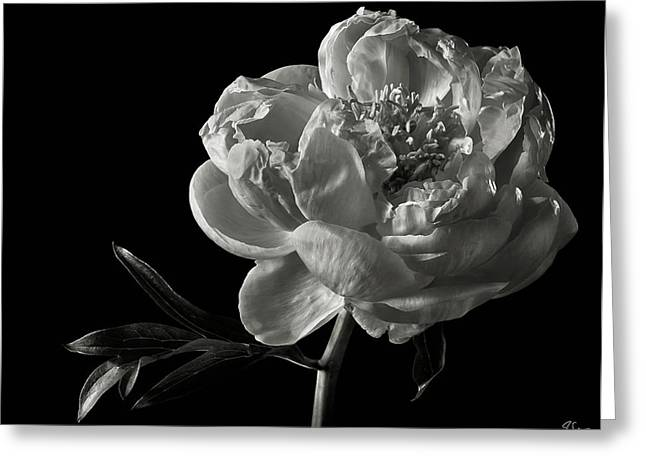 Greeting Card featuring the photograph Coral Peony In Black And White by Endre Balogh