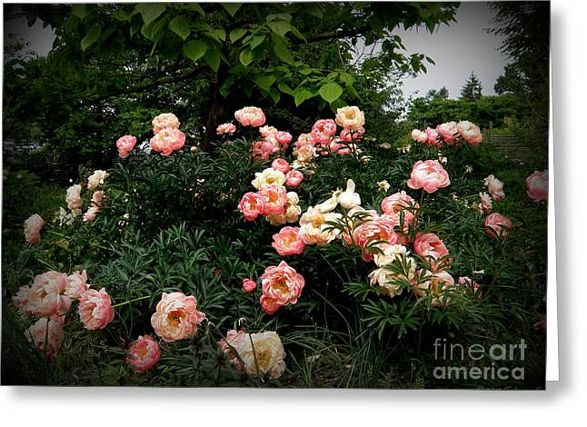 Greeting Card featuring the photograph Coral Peony by Tanya  Searcy