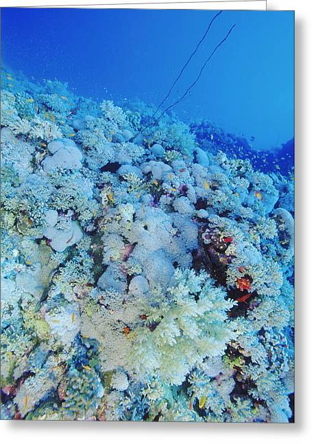 Coral Reef Greeting Card by Alexis Rosenfeld