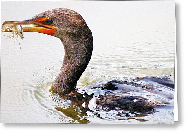 Cormorant Catching A Shrimp Greeting Card by Paulette Thomas