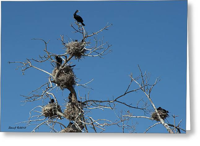 Greeting Card featuring the photograph Cormorant Condos by Stephen  Johnson