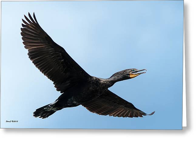 Cormorant Flying Over Duck Lake Greeting Card