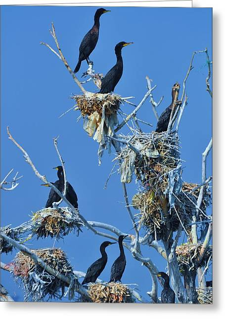 Cormorant Habitat Greeting Card