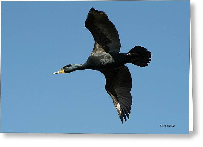 Greeting Card featuring the photograph Cormorant In Flight by Stephen  Johnson