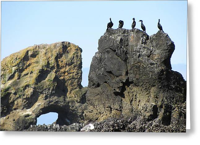 Cormorants At Indian Point Greeting Card