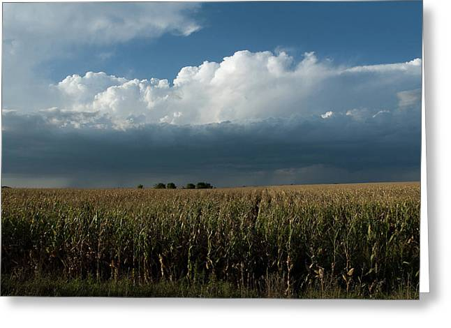 Corn Country Greeting Card