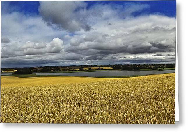Corn Field Panorama Greeting Card by Heiko Koehrer-Wagner