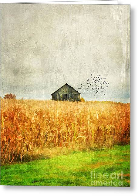 Corn Fields Of Kentucky Greeting Card by Darren Fisher