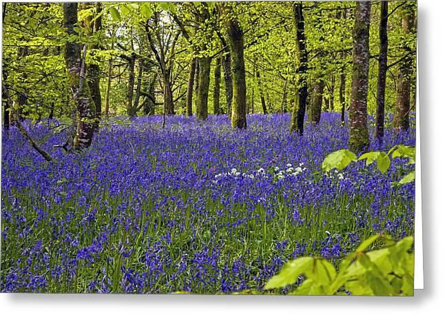 Cornwall Llanhydrock Gardens Greeting Card by Dr Keith Wheeler