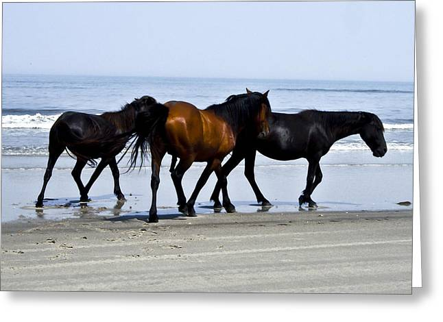 Corolla Beach Horses Greeting Card