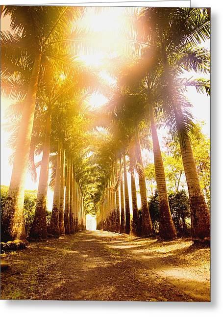 Corridor Of Palm Trees Greeting Card