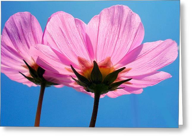 Cosmia Flowers Pair Greeting Card by Sumit Mehndiratta