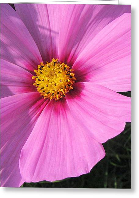 Cosmos Heart Greeting Card