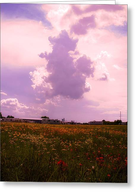Cotton County Landscape Greeting Card by Toni Hopper