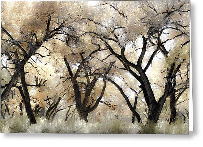 Cottonwood Trees Greeting Card by Denice Breaux
