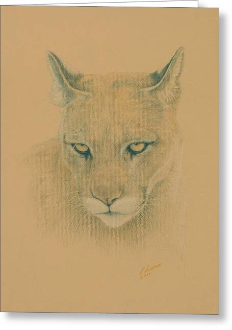 Cougar Greeting Card by Norm Holmberg