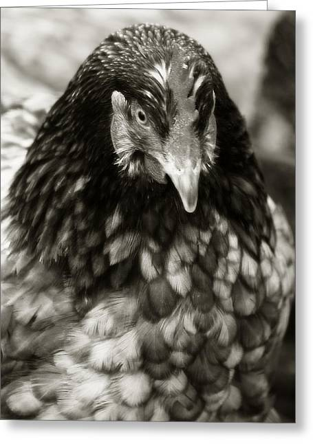 Country Chicken 5 Greeting Card by Scott Hovind