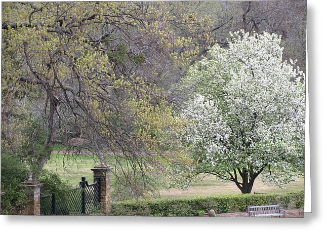 Country Elegance Greeting Card by Shawn Hughes