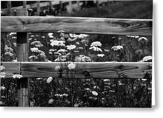 Country Flowers In Black And White Greeting Card