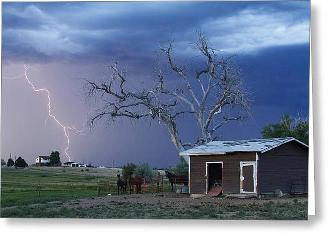 Country Horses Lightning Storm Ne Boulder County Co  63 Greeting Card