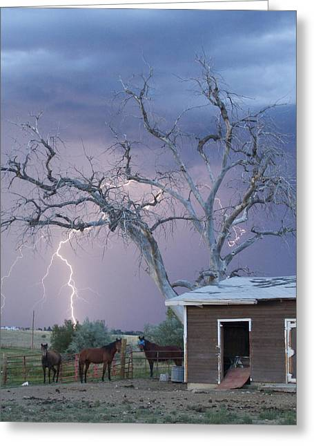 Country Horses Lightning Storm Ne Boulder County Co 66v Greeting Card
