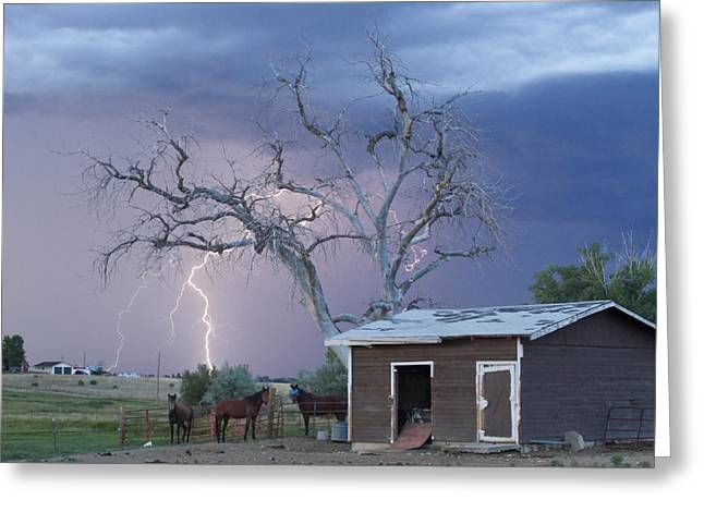 Country Horses Lightning Storm Ne Boulder County Co  Crop Greeting Card