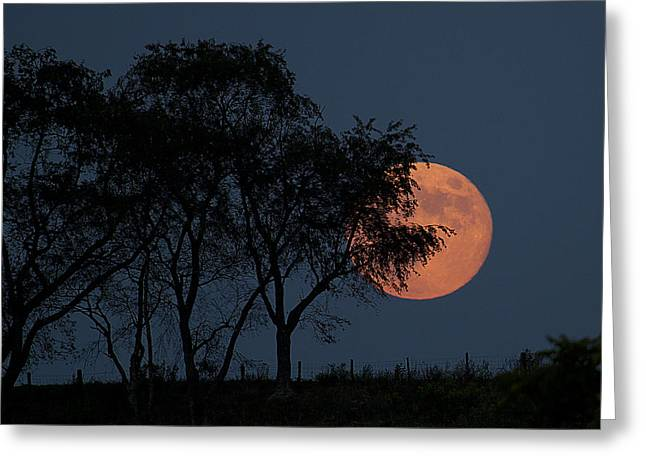 Country Moon  Greeting Card by Betsy Knapp