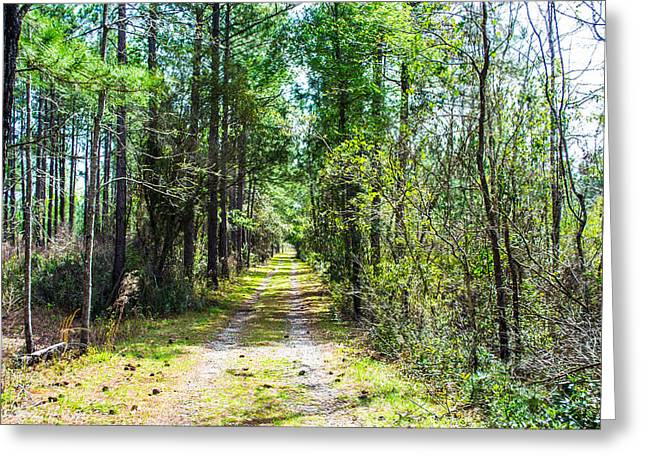 Greeting Card featuring the photograph Country Path by Shannon Harrington