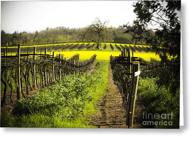 Greeting Card featuring the photograph Country Roads by Leslie Hunziker