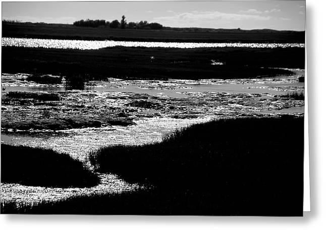Covering The Marshes Greeting Card by Jez C Self