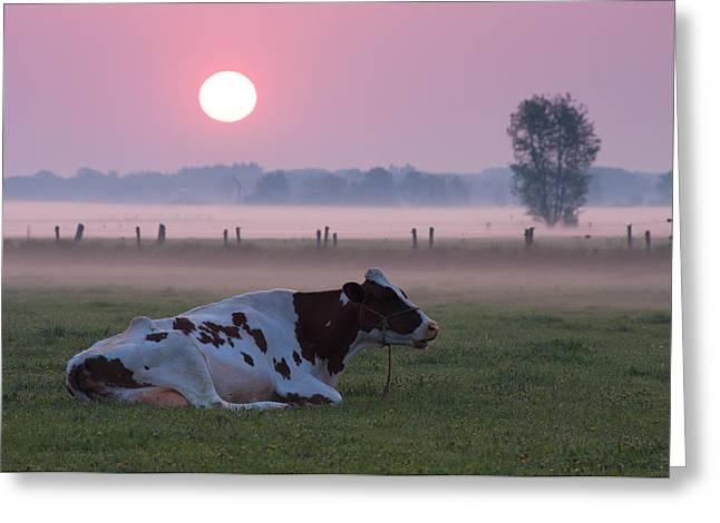 Greeting Card featuring the photograph Cow In Meadow by Hans Engbers