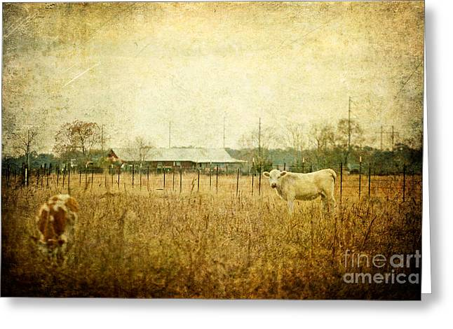 Cow Pasture Greeting Card by Joan McCool