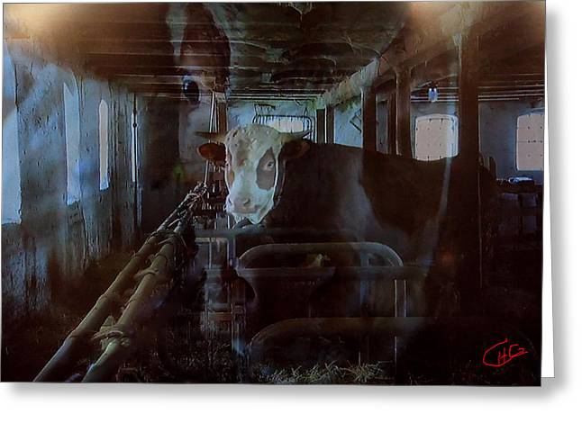 Cow Shelter Indoor Greeting Card by Colette V Hera  Guggenheim