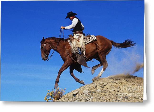 Cowboy Greeting Card by George D Lepp and Photo Researchers