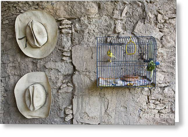 Greeting Card featuring the photograph Cowboy Hats And Parakeets by Craig Lovell