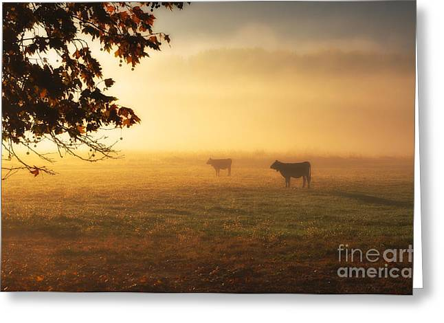 Cows In A Foggy Field Greeting Card