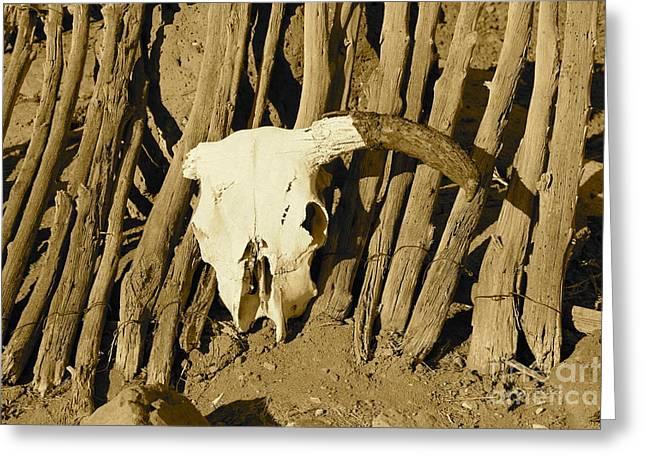Cowskull - Sepia Greeting Card by Pamela Walrath