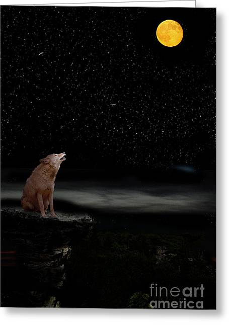 Greeting Card featuring the photograph Coyote Howling At Moon by Dan Friend