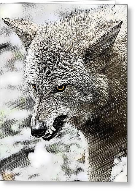 Coyote Snarling Greeting Card by Dan Friend