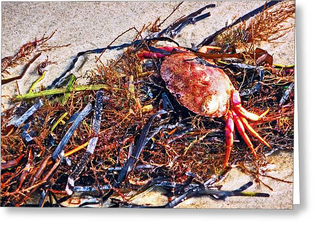 Greeting Card featuring the photograph Crab Boil by William Fields