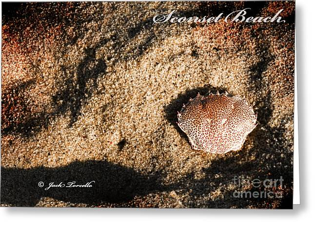 Greeting Card featuring the photograph Crab Shell 'sconset Beach Nantucket by Jack Torcello