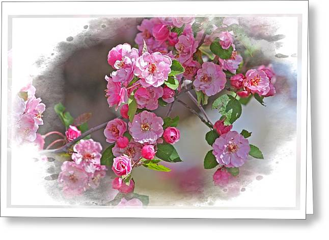 Crabapple Plethora Greeting Card by Judy Deist