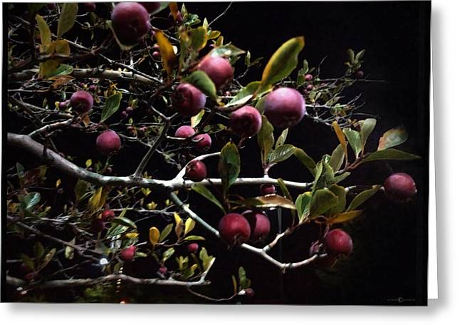 Crab Apples At Night Greeting Card by Tim Nyberg