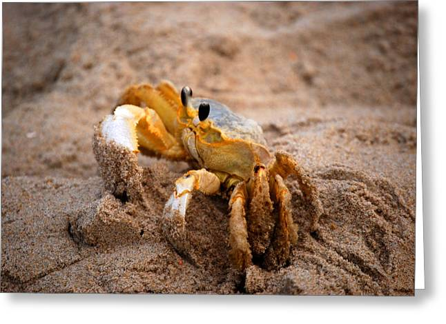 Greeting Card featuring the photograph Crabby by Linda Mesibov