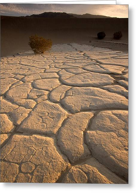 Cracked Mud Lies On Top Of The Sand Greeting Card by Phil Schermeister