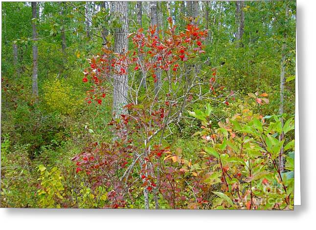 Cranberries With Early Autumn Colors Greeting Card